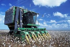 Cotton-harvest